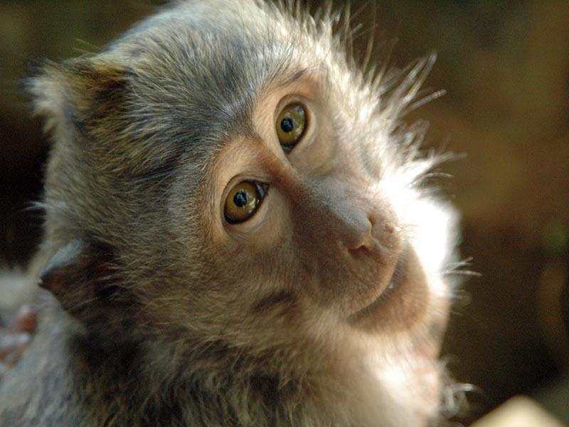 Scimmia legata sotto il sole in giardino scatta la - Il sole nel giardino ...