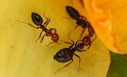 Stufi delle formiche dentro casa ecco i rimedi naturali - Come allontanare le formiche da casa ...